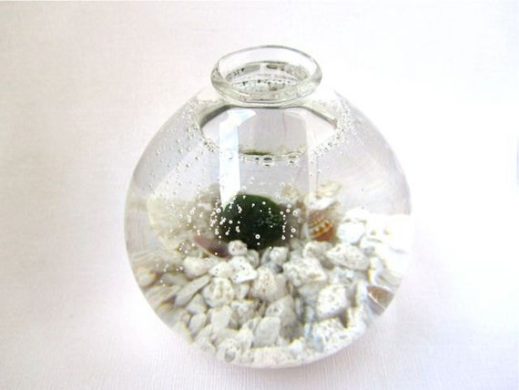 Handblown Glass Marimo Moss Ball Habitat
