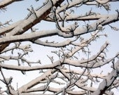 """Photograph Snowfall On Trees, 8 x 10,  """"Snowy Winter  Morning In Maine."""" Fine Art"""