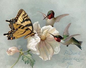 Hummingbirds Butterfly Card - Hibiscus Flower - Bird Greeting Card