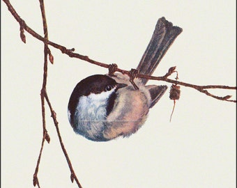 Black Capped Chickadee Bird Repro Greeting Card Prang 1889