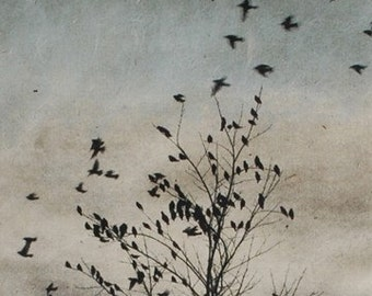Art Print Etching, February Visit, Doves Fly In, solar plate etching on handmade paper