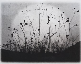Etching, Moonrise, Charmed Meadow, solarplate etching, moon print