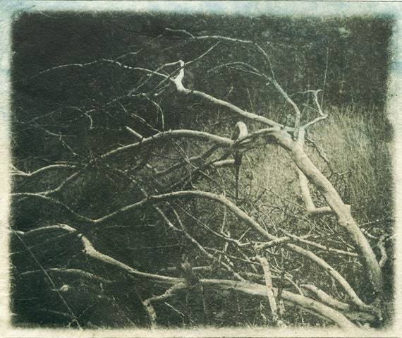 Fragment: Winter Walk III