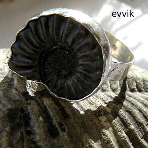 ammonite from Peru