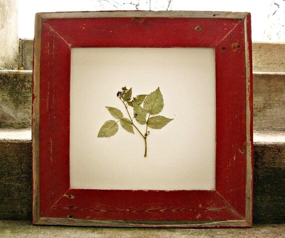 Amazing Grace ---raspberry leaves in red barnwood