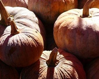 Lisu pumpkin heirloom seeds from hilltrib organic garden