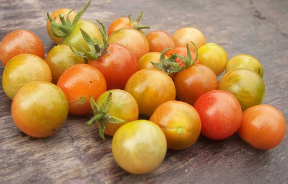 ChErrY ToMaToEs heirloom seeds from our organic garden