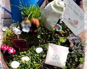 Faerie Garden Kit (Make-Your-Own Fairy Garden Kit)