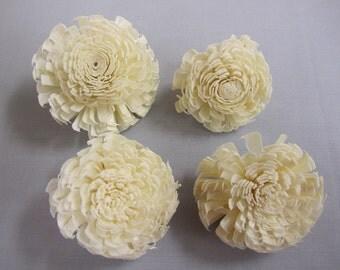 Sola Chorki Flowers  -- Set of 6 -- STEMMED