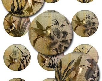 Hummingbirds Vintage Ephemera Botanical Rounds for Glass and Resin Pendants Instant Download Multiple Sizes (12-29)