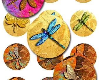 Dragonfly Round Circles Instant Download Digital Images 5 Pages of Sizes JPEG (12-42)