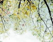 Delicate Canopy - 8 x 12 fine art photographic print. A thin veil of golden leaves speckle the autumn fall sky. Fragility. Perfection of a changing season
