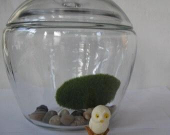 glass apple cookie candy apothecary terrarium jar