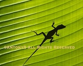 Green Gecko lizard on a Tropical palm leaf 8 x 10  Fine Art Print