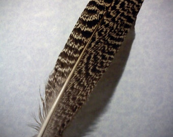 One of a Kind Speckled Peacock quill