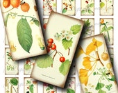 Herbarium Berries (1) Digital Collage Sheet with Vintage Berries, Nuts, Fruits - Domino 1x2 or Bamboo size - Buy 3 Get 1 Extra Free