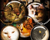 CAT PORTRAITS - 1.5 inch circles or 25mm or any smaller size available - Digital Collage Sheet - Buy 3 Get 1 Extra Free