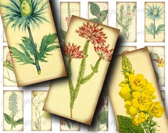 Herbarium (2) Digital Collage Sheet with Vintage Illustrations of Flowers, Botany - Dominos 1x2 inch or bamboo size - Buy 3 Get 1 Extra Free
