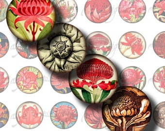 Waratahs, Gorgeous Australian Flower - Digital Collage Sheet - 48 Circles 1inch - 25mm or any smaller available - Buy 3 Get 1 Extra Free