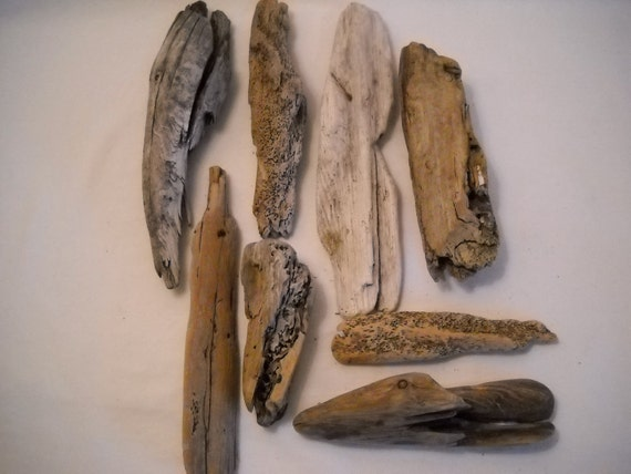 Driftwood Pieces From The  Pacific Northwest