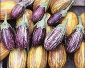 Eggplant Seeds- 'Udumalapet' Striped- Grow your own NON-GMO Food