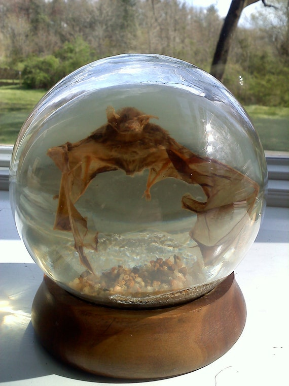 Very Cool Encased Bat in Glass Paperweight