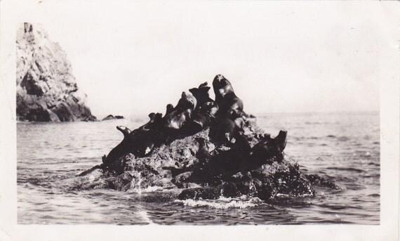 1940's Sea lions sitting on rocks in ocean