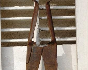 Vintage Steel Sheep Shears Spring Handles - Vintage Primitive Country Farm Rustic Hand Held Tool, Treasury Item