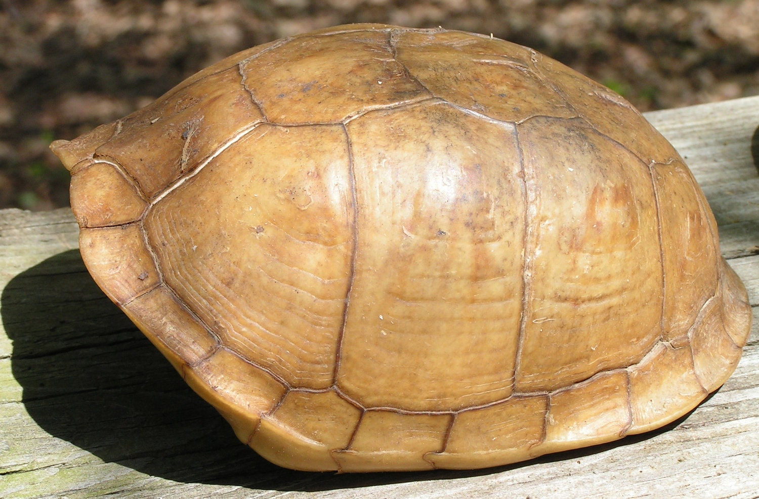 The turtle shell is made up of numerous bony elements generally named after similar bones in other vertebrates and a series of keratinous scutes which are also