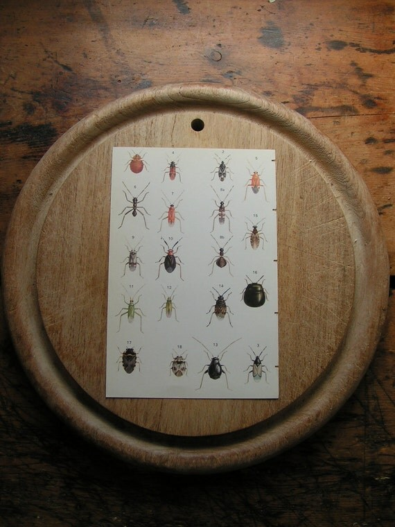 Vintage Double Sided Insect Botanical Print- red and black bugs