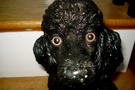 SALE Black Poodle Needs a Home