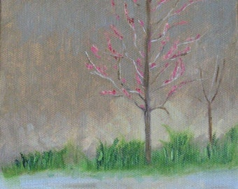 Redbud Tree Blossoms - Original Oil Painting