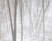 Forest Fog 8X10 Fine Art Photograph