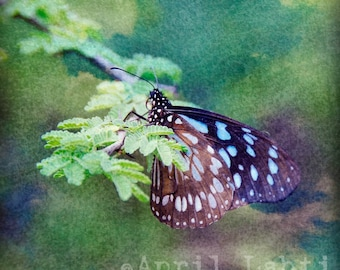 Butterfly Dreams 8X8 Fine Art Photograph