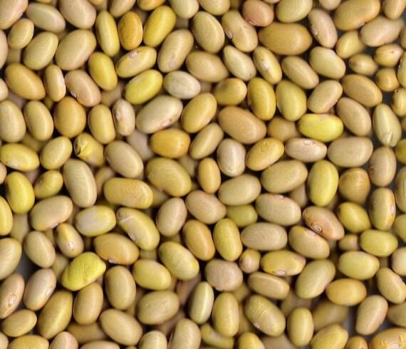 Fart Free Mayacoba Beans