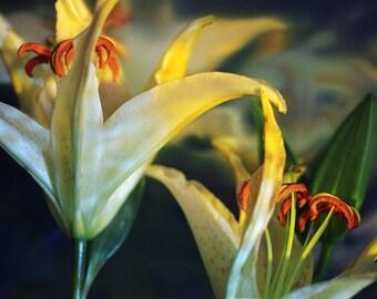 Lilies 007