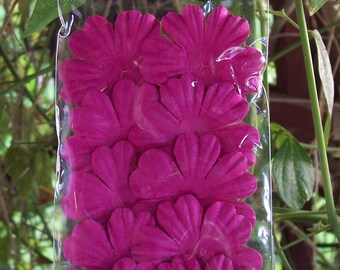 Bazzill Paper Primula Flowers