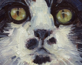 Black and white maine coon type of cat is subject of oil painting feline portrait. Commissions available