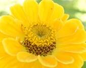 Yellow Zenia - Note Card Original Fine Art Photography