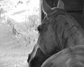 Coal--Black and White Horse Country Farm Nature 8x10 Fine Art Photograhy Print