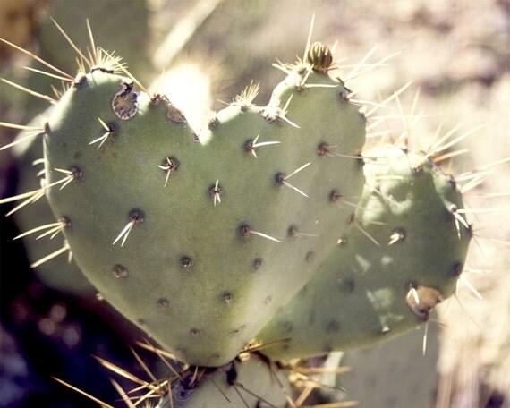 fine art photograph / green cacti heart, arizona / 8x10 print