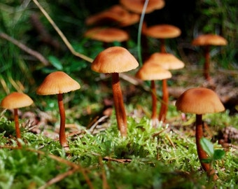 Tiny forest mushrooms, nature photography print