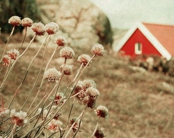 Scandinavian art, fine art photography print, flowers and red house, Norwegian scenery, vintage inspired, nursery room decor 8x8