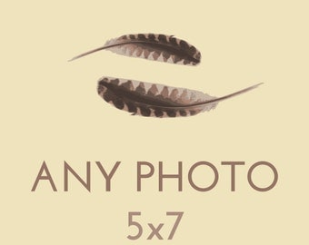 Any Kanelstrand Photograph as 5x7 Print