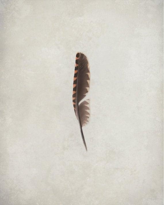 Still life art print, single feather, nature wall art, 8x10