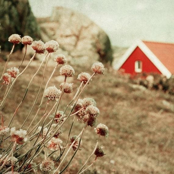 Scandinavian art, fine art photography print, flowers and red house, Norwegian scenery, vintage inspired, nursery room decor 8x8