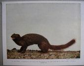 Vintage Mink Print, AW Mumford