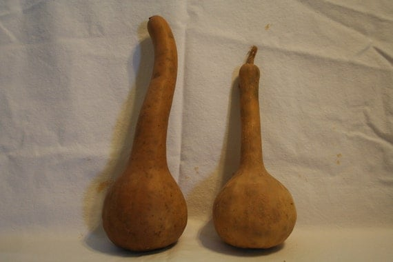 Two Cleaned Dipper Gourds
