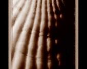 Sea Shell type 55 Polaroid Photograph