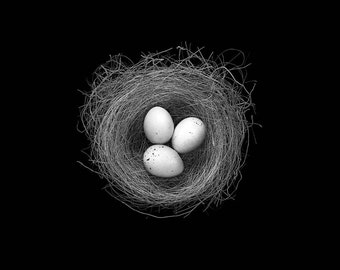 black and white birds nest photograph (NestG027BB&W)